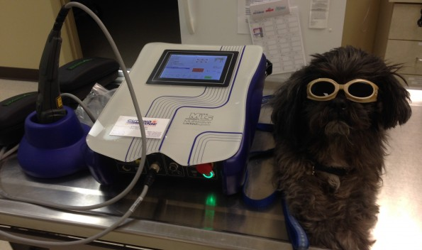White Oak Veterinary Hospital MLS Laser Treatment Therapy